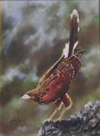 "Dave Baker. (American) Oil on canvas.Titled: ""The Harris hawk"""